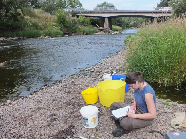 ART assistant biologist Helen recording the catch at the Stepping Stones site on the lower river. Numbers across the lower river are extremely poor and causing great concern for the biologists and anglers alike.