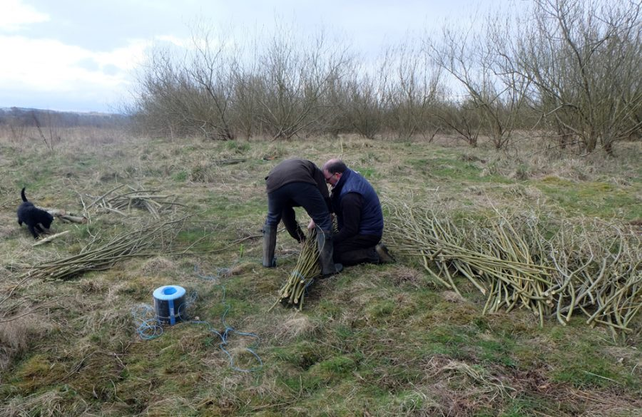 Tying bundles of willow into faggots to be used on a bank stabilisation project